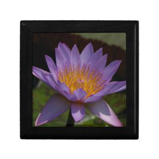 Nénuphar pourpre de Lotus Boîte À Souvenirs