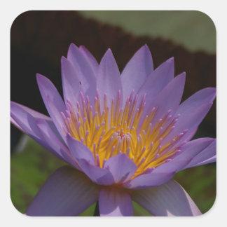 Nénuphar pourpre de Lotus Sticker Carré