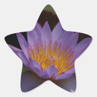 Nénuphar pourpre de Lotus Sticker Étoile