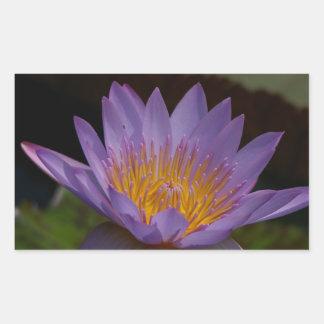 Nénuphar pourpre de Lotus Sticker Rectangulaire