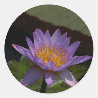 Nénuphar pourpre de Lotus Sticker Rond