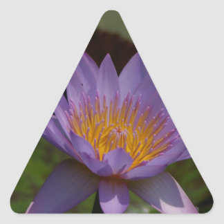 Nénuphar pourpre de Lotus Sticker Triangulaire