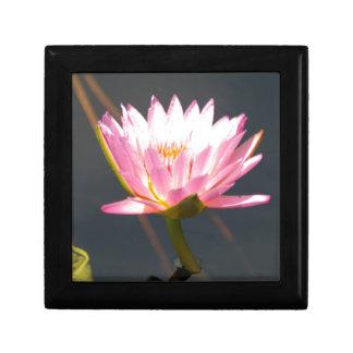 Nénuphar rose de Lotus Boîte À Souvenirs