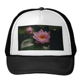 Nénuphar rose de Lotus Casquette