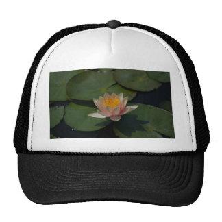 Nénuphar rose de Lotus Casquette Trucker