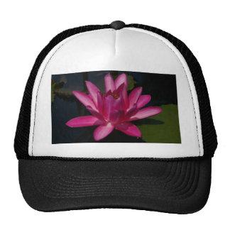 Nénuphar rose de Lotus Casquettes