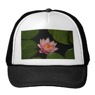 Nénuphar rose de Lotus Casquettes De Camionneur