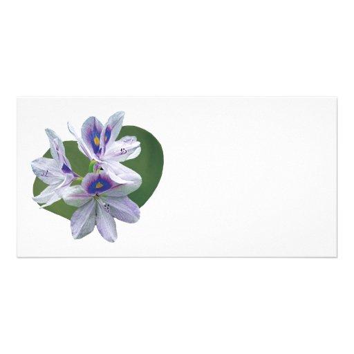 Nénuphars de lavande cartes avec photo