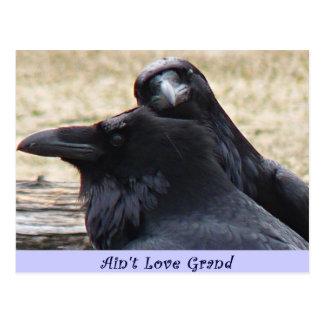 N'est pas l'amour Ravens grand en carte postale