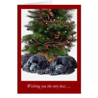 Newfies et le chat de Noël Carte De Vœux