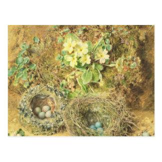 Nids de primevères et d'oiseaux carte postale