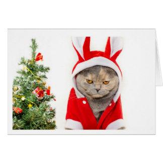 Noël - chat carte de vœux