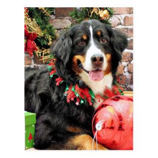 Noël - chien de montagne de Bernese - Chloe Carte Postale