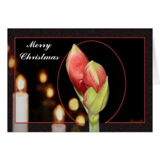 Noël d'amaryllis carte de vœux