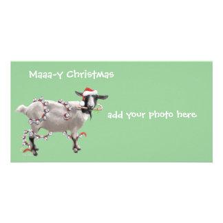 Noël de chèvre modèle pour photocarte