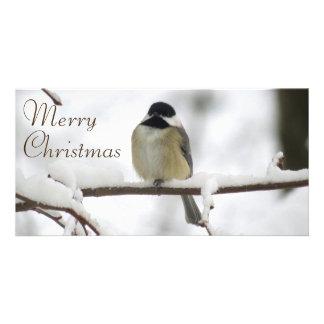 Noël de Chickadee Modèle Pour Photocarte