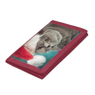 Noël gris de chat - chat de Noël - chat de chaton