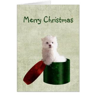 Noël maltais de chiot cartes
