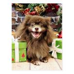 Noël - Pomeranian - Fred