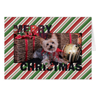 Noël - Yorkshire Terrier - Vinnie Carte De Vœux