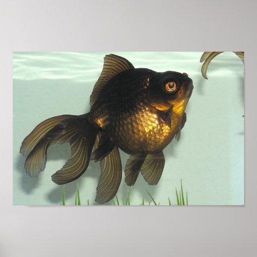 Noir amarrez le dossier de poisson rouge posters zazzle for Acheter poisson rouge laval