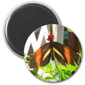 Noir de jaune orange de papillon aimant