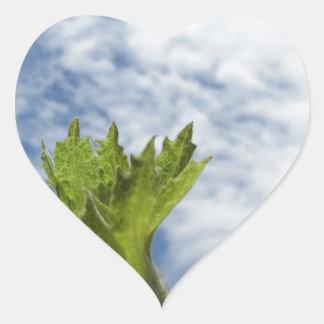 Noisette verte fraîche simple contre le ciel bleu sticker cœur
