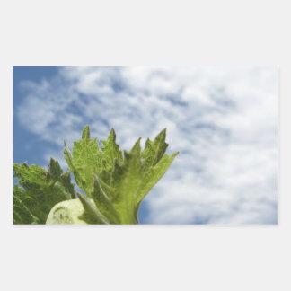 Noisette verte fraîche simple contre le ciel bleu sticker rectangulaire