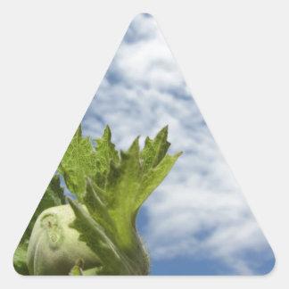 Noisette verte fraîche simple contre le ciel bleu sticker triangulaire