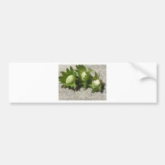 Noisettes vertes fraîches sur le plancher autocollant de voiture