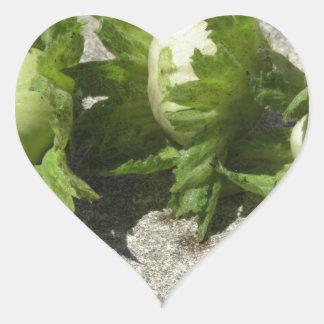 Noisettes vertes fraîches sur le plancher sticker cœur