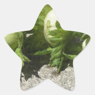 Noisettes vertes fraîches sur le plancher sticker étoile