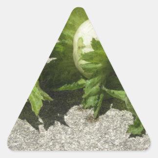 Noisettes vertes fraîches sur le plancher sticker triangulaire