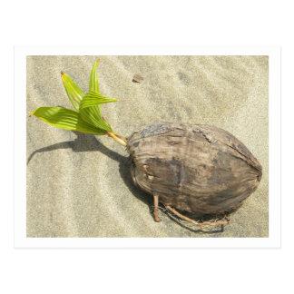 Noix de coco sur la carte postale de plage