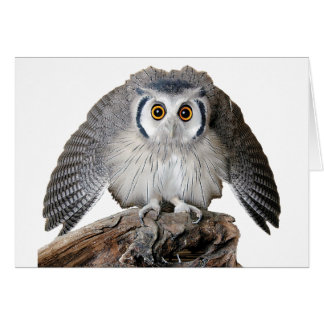 """""""Northern White-faced Owl"""" グリーティング・カード"""