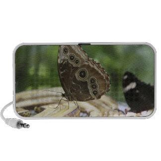 Nourriture pour des papillons haut-parleurs iPhone