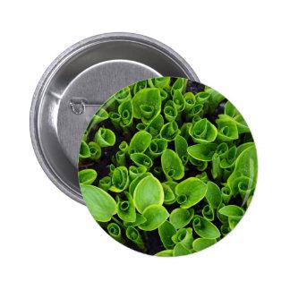 Nouveaux plantes verts de hosta dans le jardin badges
