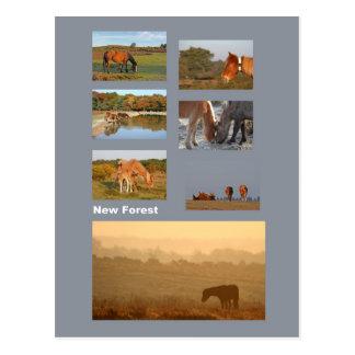 Nouvelle carte postale de poneys de forêt