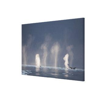 Novaeangliae de Megaptera de baleines de bosse) Impression Sur Toile