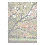 Nuances d'automne, arborétum de Westonbirt Bristol