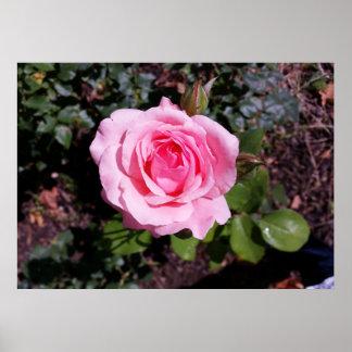 nuances de rose poster