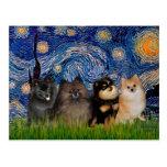 Nuit étoilée de Pomeranians (quatre) - Carte Postale