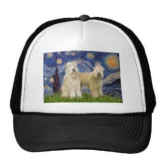 Nuit étoilée - terriers blonds comme les blés (deu casquette trucker