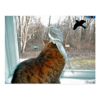Observation d'oiseau cartes postales