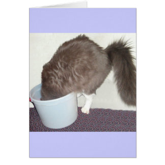Obtenez bientôt le chat bon cartes