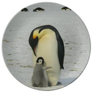 Océan antarctique d'oiseaux de plage de neige de assiettes en porcelaine