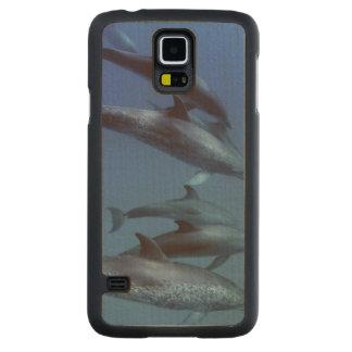 Océan atlantique a repéré des dauphins. Bimini, Coque Slim Galaxy S5 En Érable