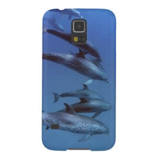 Océan atlantique a repéré des dauphins. Bimini, Protections Galaxy S5