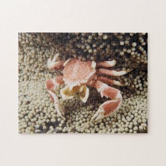 Océan Indo-Pacifique, plan rapproché de crabe Puzzle