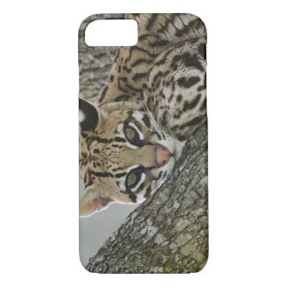 Ocelot, pardalis de Felis, captif, femelle Coque iPhone 8/7